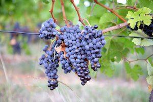 Produsele naturale si obiceiurile alimentare ale romanilor